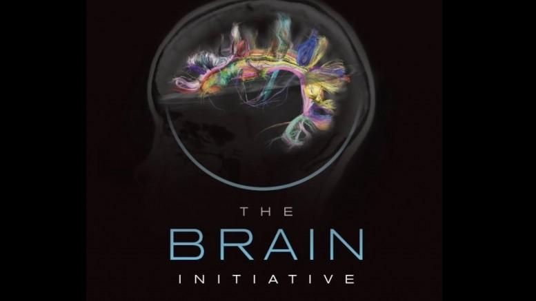 NIH 2025 Brain